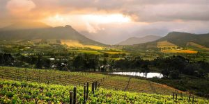03-day-in-winelands