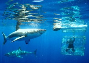 05-shark-cage-diving