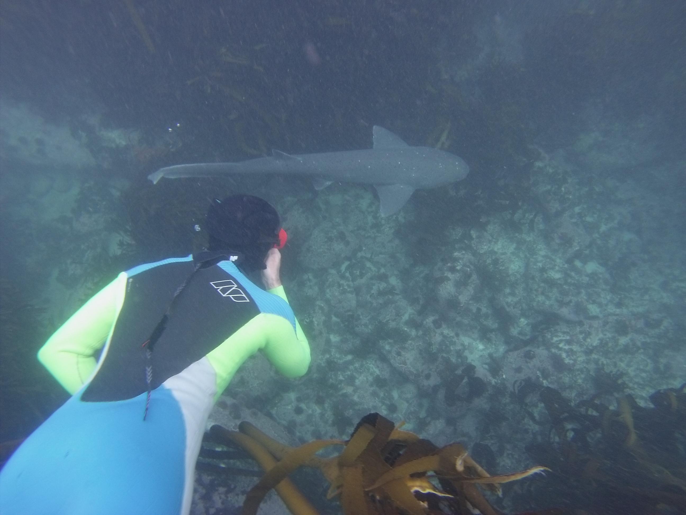 Diving kelp forest cape town