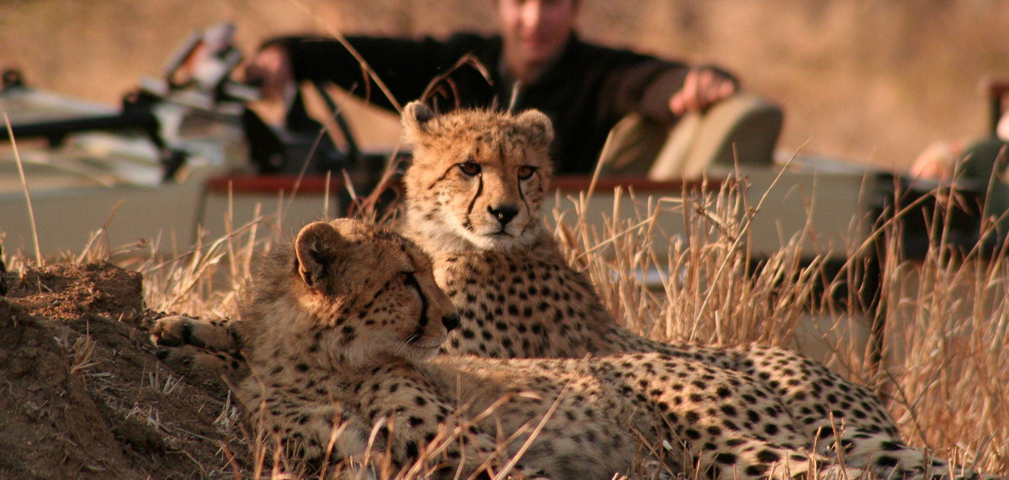 beste afrika safaris