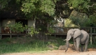 Tintswalo Safari Lodge 132_D423664