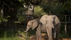 Tintswalo Safari Lodge 134_D423666