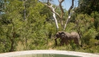 Tintswalo Safari Lodge 361_D425096