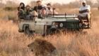 Tintswalo Safari Lodge - Lion